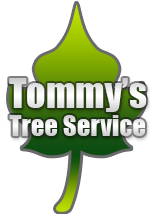 Tommy Frazier Tree Care